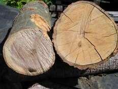 Small green wood 1455658857
